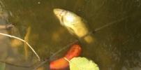 Für einen Fisch ist es leider zu spät